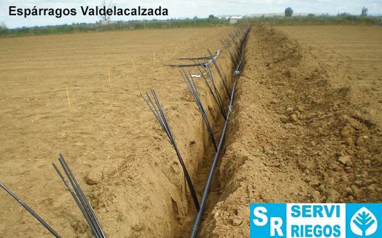 esparragos-valdelacalzada.jpg