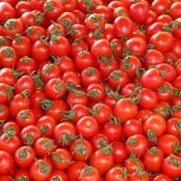 tomates.jpg