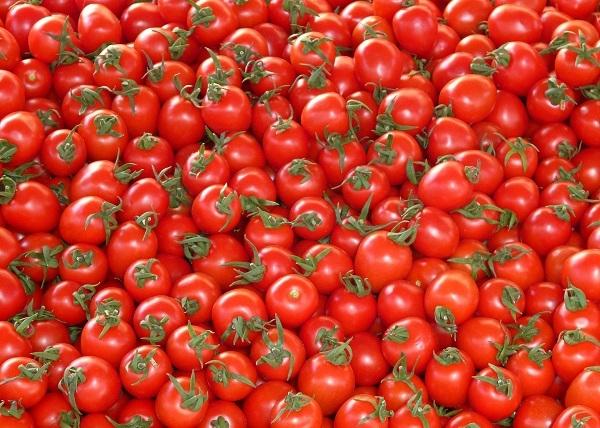 El calor amenaza con provocar pérdidas por valor de 450 millones en la producción de tomate.