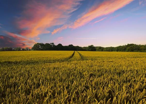 Primeros apuntes de los cambios que se producirán en la Política Agraria Común (PAC)