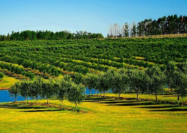 Posible ampliación de las zonas de regadío en Extremadura ante el éxito obtenido en la solicitud de ayudas para su implantación.