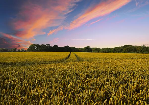 Hacienda publica la reducción de módulos fiscales para agricultura.