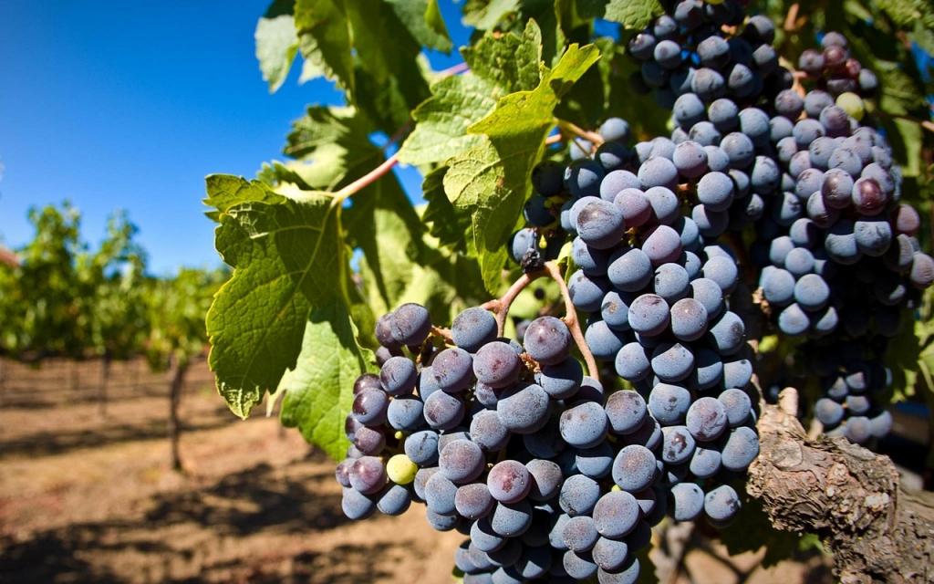 A Extremadura rejeita o controle das plantações de vinha destinadas à cava pelo Conselho de Regulamentação, sediado na Catalunha.