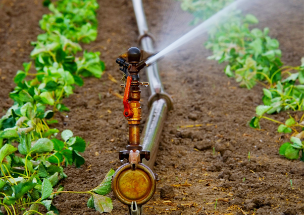 El sector agrario reduce el consumo de agua un 22 % en los últimos 20 años.