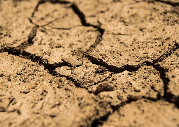 O Guadiana tem água apenas para 60% da campanha de rega.