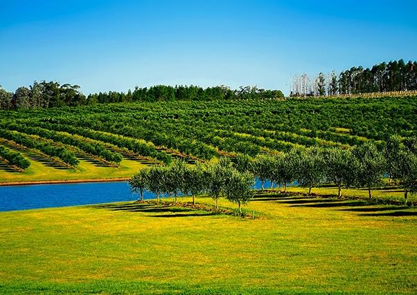"""""""A irrigação gera dinheiro e economia em todas as direções."""" Isidro Hurtado, presidente da Comunidade de Irrigação Tierra de Barros."""