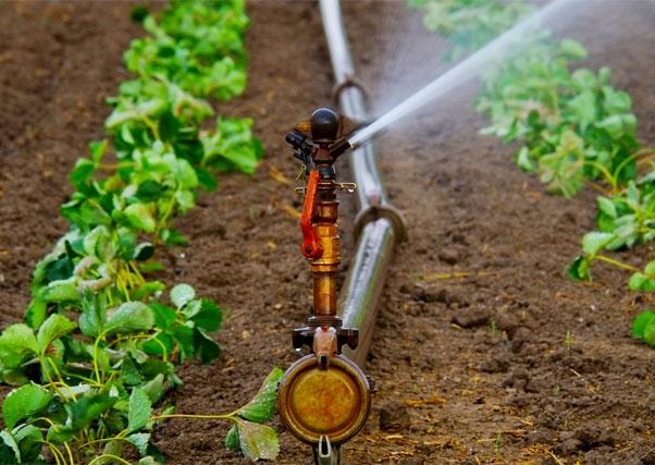 A Junta de Extremadura promove a eficiência na irrigação.