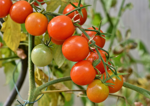 tomate-serviriegos.png